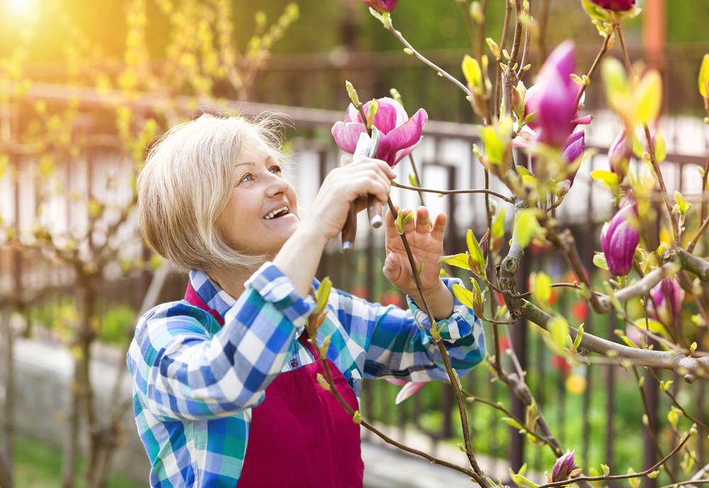 Beautiful senior woman pruning magnolia tree in her garden