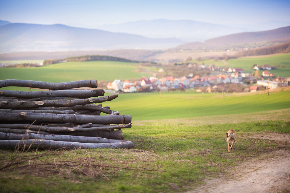 Beautiful village countryside landscape with dog running in background