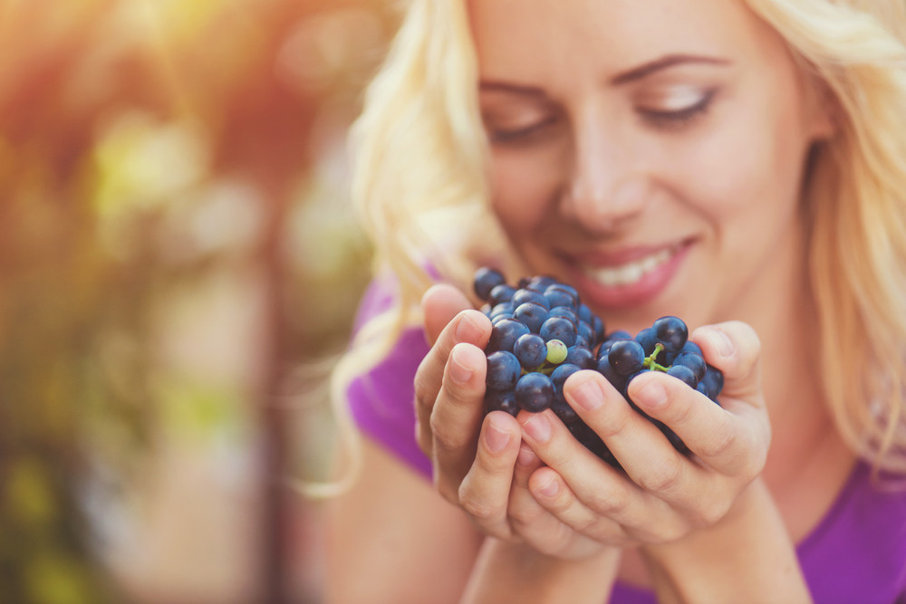 Beautiful young  blond woman harvesting blue grapes