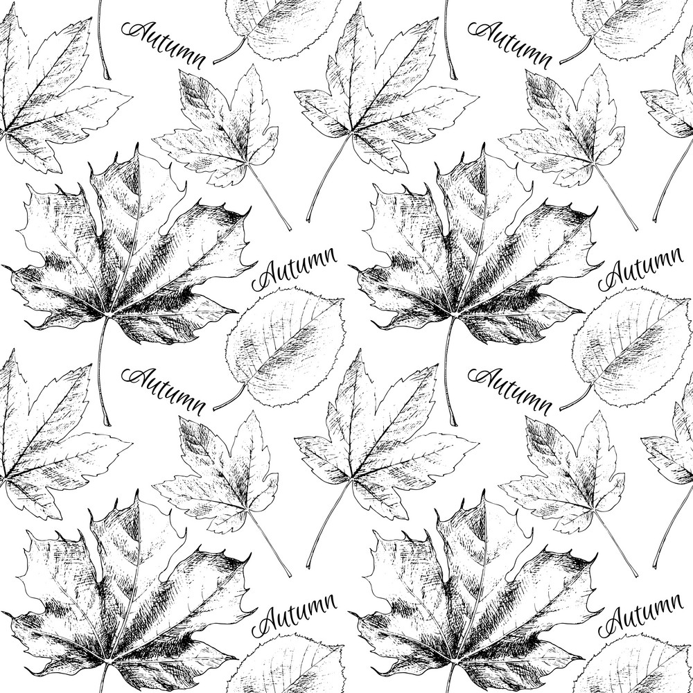 Black and white hand drawn autumn leaves. Vector illustration.