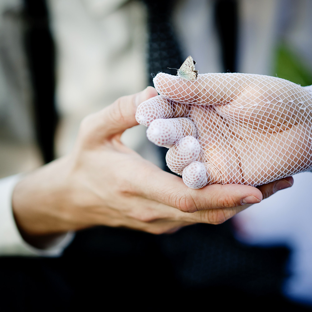 Bride and groom hands with a beautiful butterfly