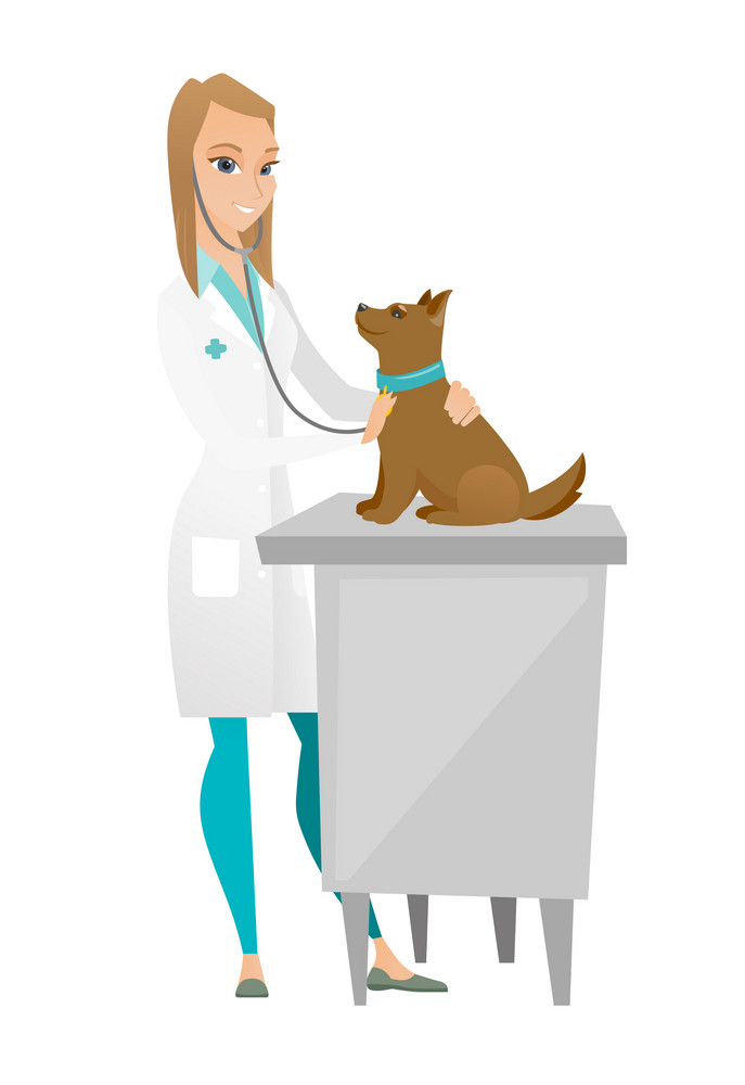 Caucasian veterinarian examining dog in hospital. Veterinarian checking heartbeat of a dog with stethoscope. Medicine and pet care concept. Vector flat design illustration isolated on white background