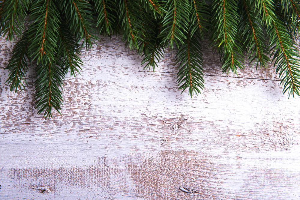 Close up of fir tree branches on white wooden background.
