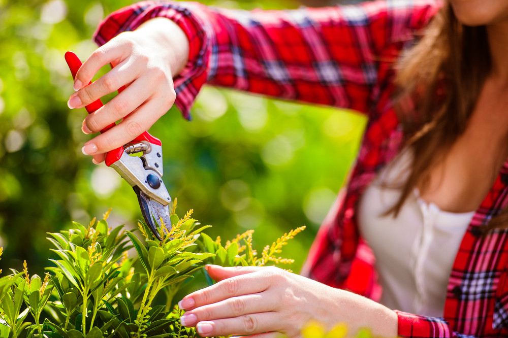 Close up of hands of a gardener pruning little tree against green sunny nature