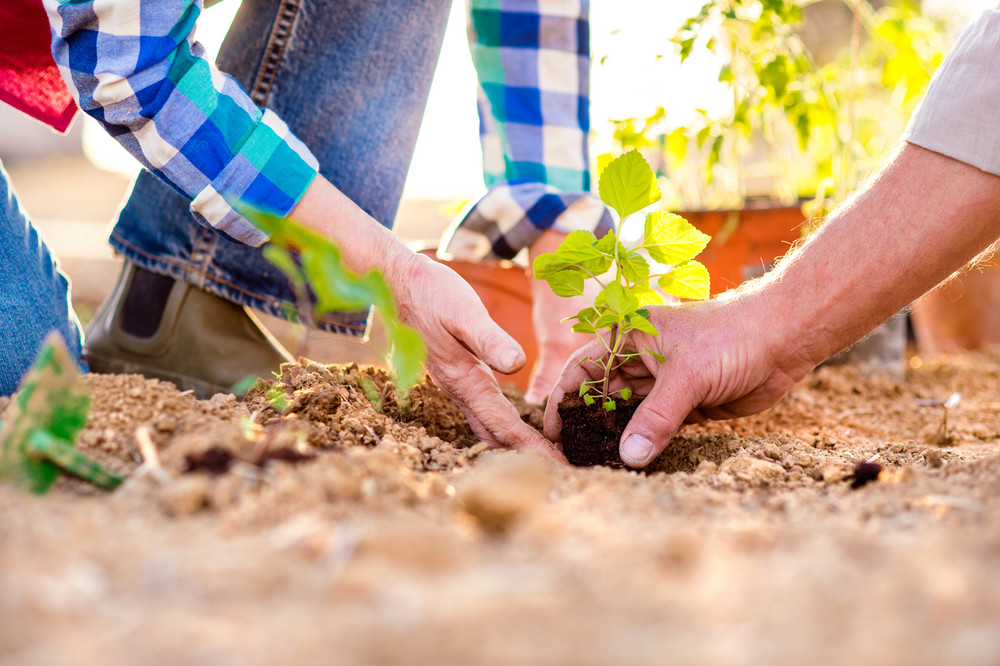 Close up of hands of unrecognizable senior couple holding little seedling ready to plant
