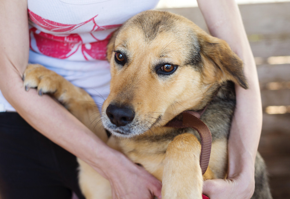 Close-up of woman holding and stroking her dog