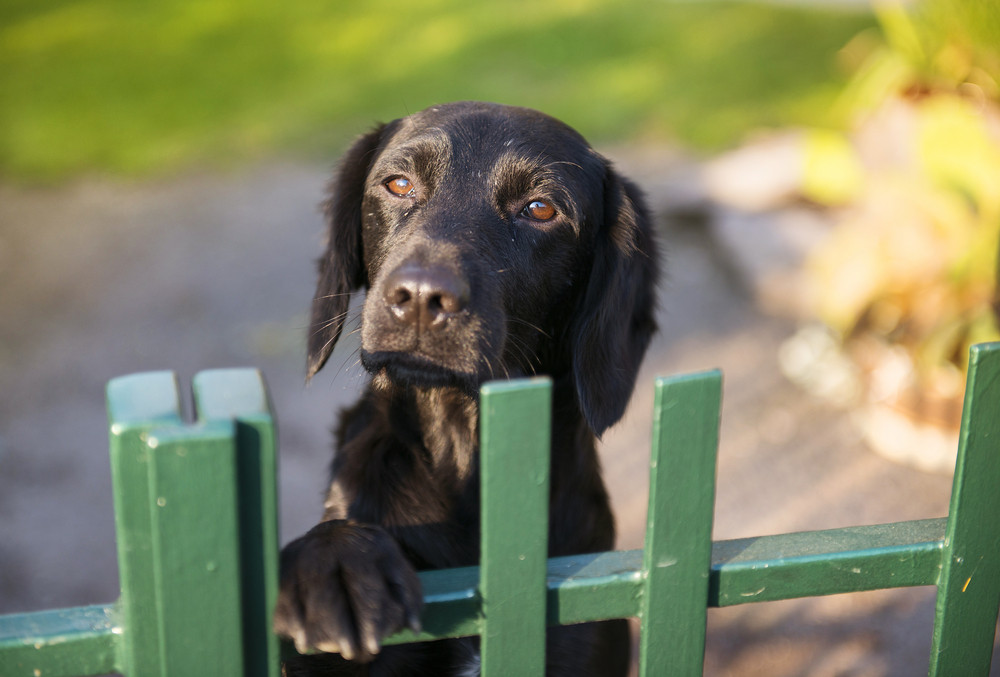 Cute black dog behind the garden fence