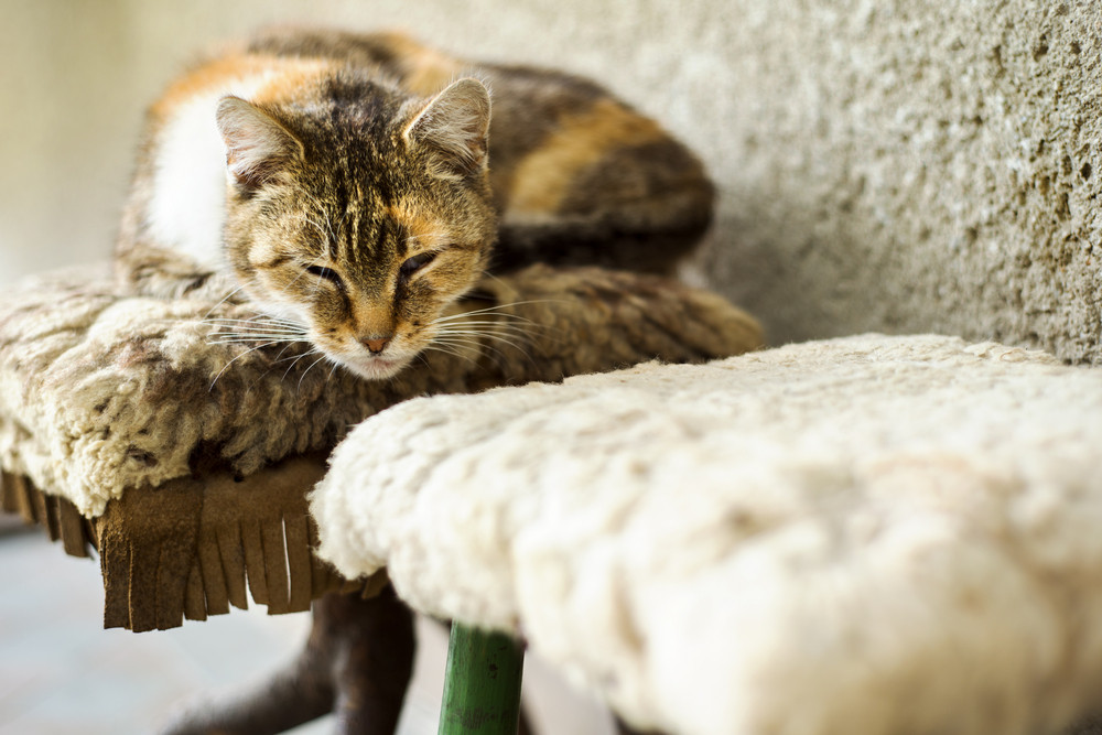 Cute brown cat sleeping on bench in front of the house