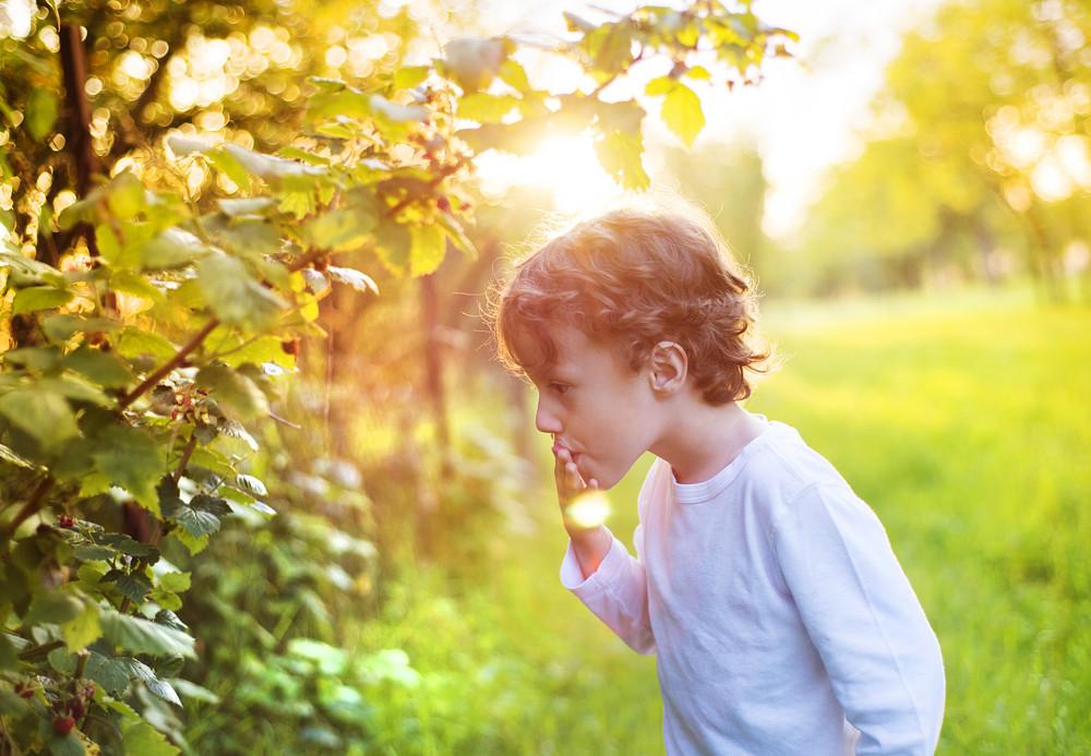 Cute little boy picking berries outside in a sunny garden