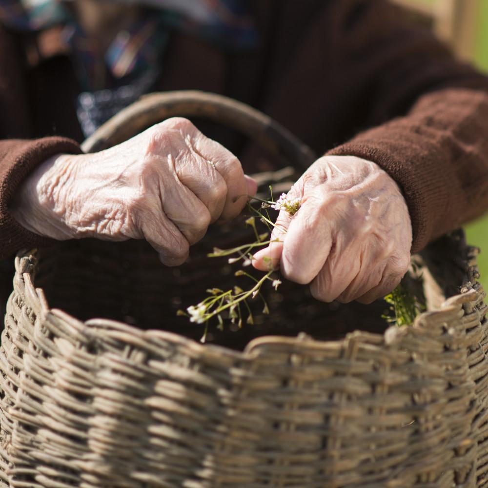 Detail of very old woman's hands working in garden