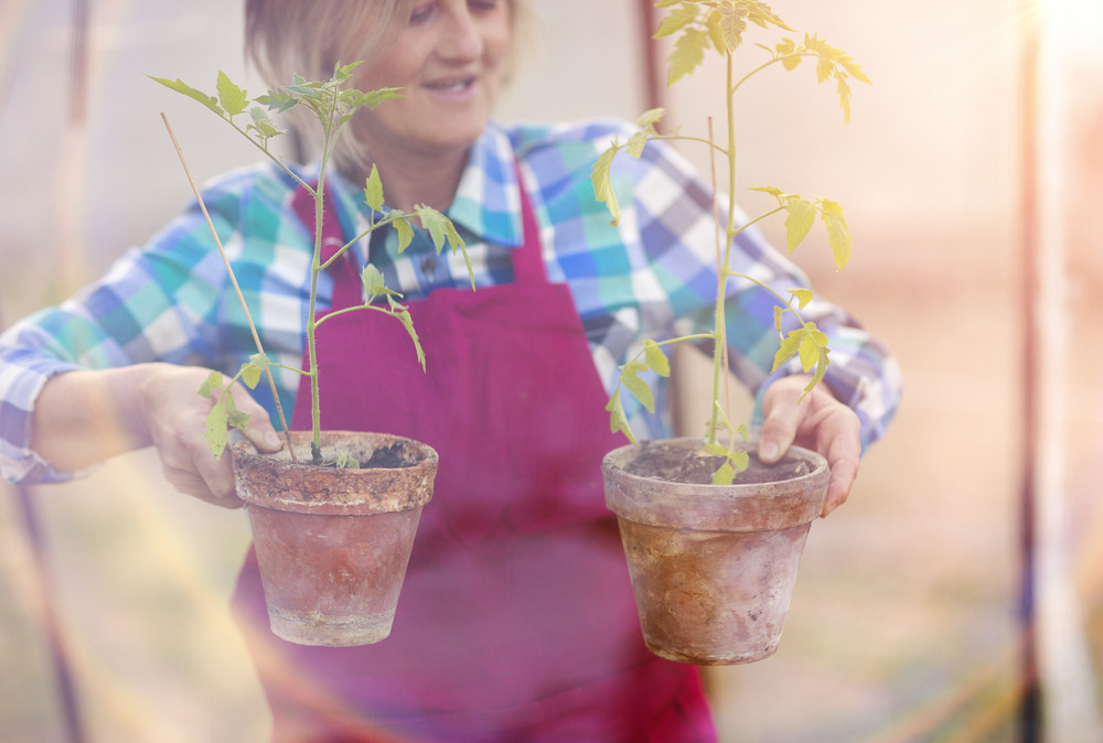 Double exposur of senior woman planting seedlings in a greenhouse
