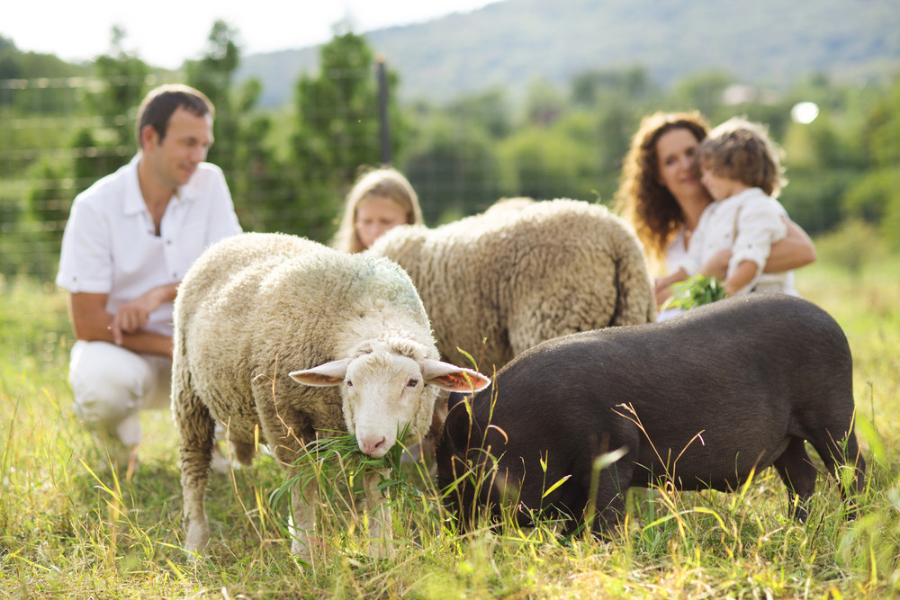 Family with five kids is feeding animals on the farm