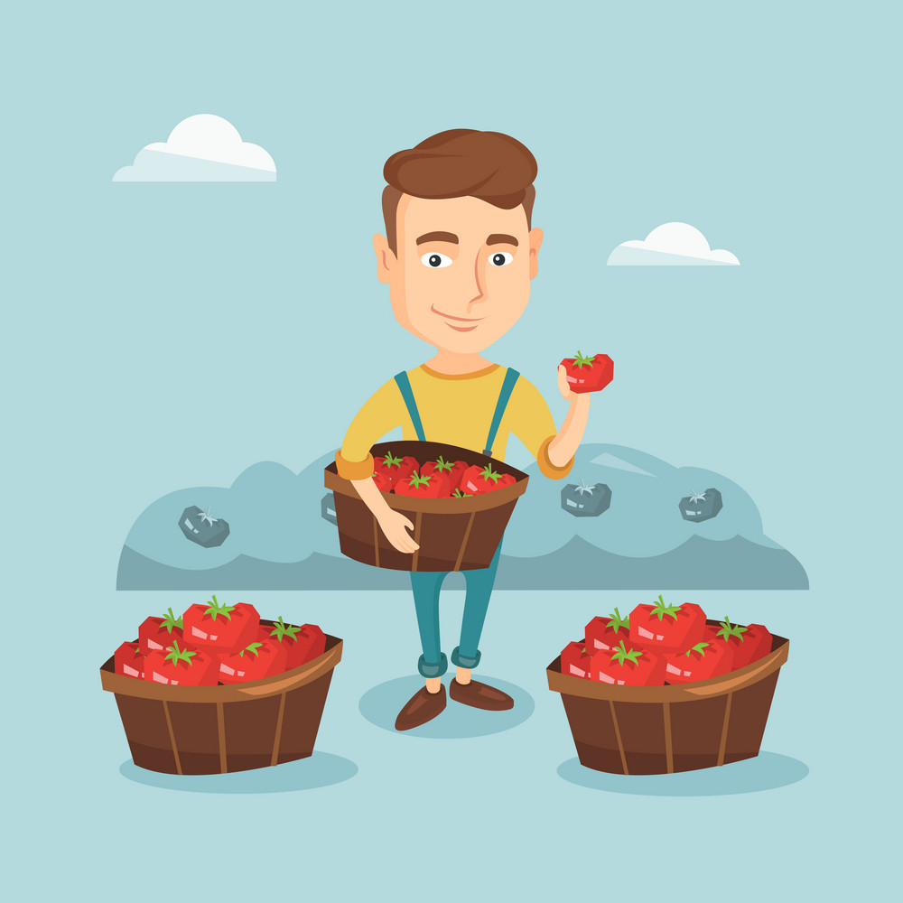 Farmer holding basket with tomatoes. Farmer showing ripe red tomato on the background of field with bushes of tomatoes. Farmer collecting tomatos. Vector flat design illustration. Square layout.