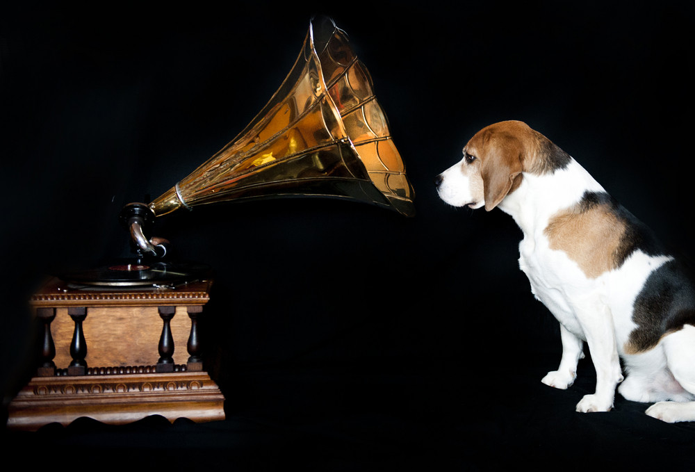 Funny dog is listening music from vintage gramophone