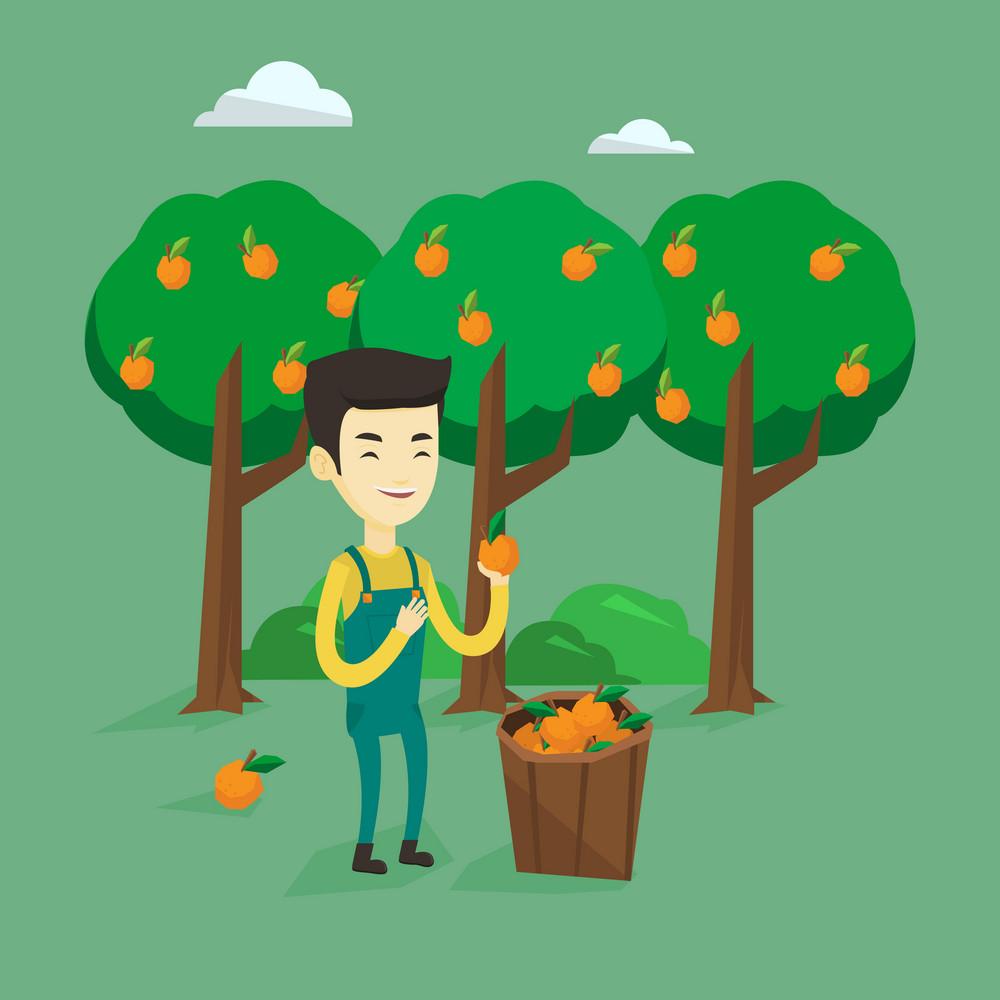 Gardener holding an orange on the background of orange trees. Smiling asian gardener collecting oranges. Gardener standing near basket with oranges. Vector flat design illustration. Square layout.