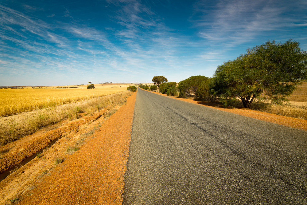 Golden wheat field, road through, blue sky