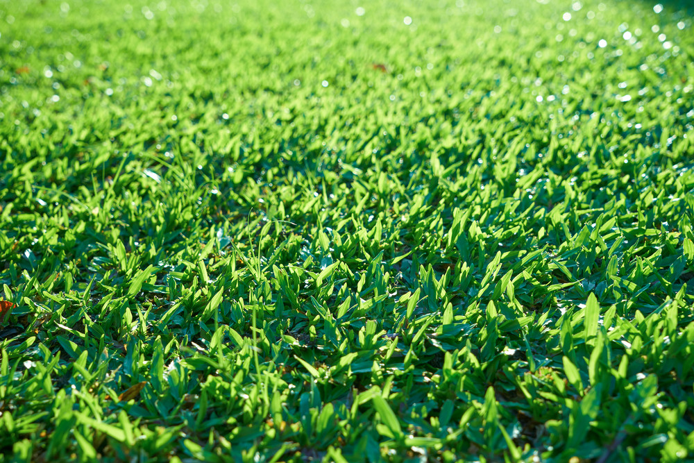 Green grass texture from a field with depth of field