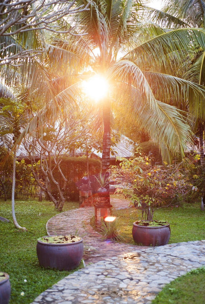Green, sunny and tropical garden with palm tree.