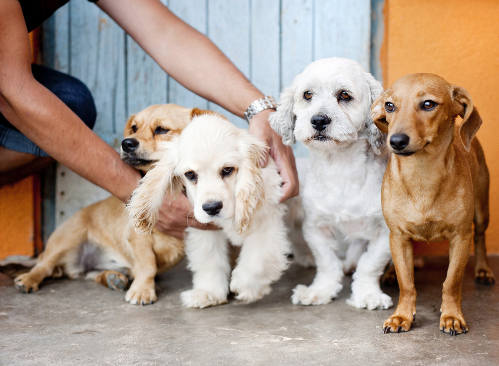 Group of four dogs sitting on the floor