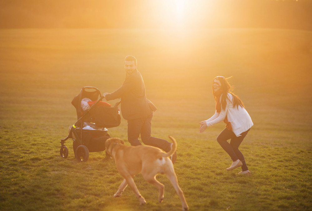 Happy and young family with pram and dog during the walk in nature