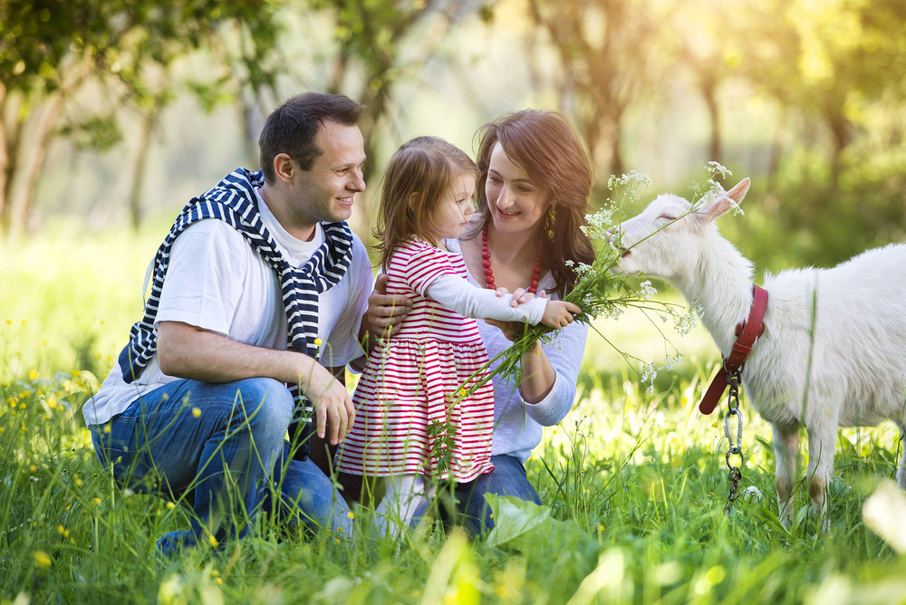 Happy young family spending time together outside in green nature with a goat.