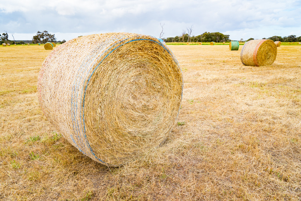 Hay and straw bales in the end of summer. Western Australia.