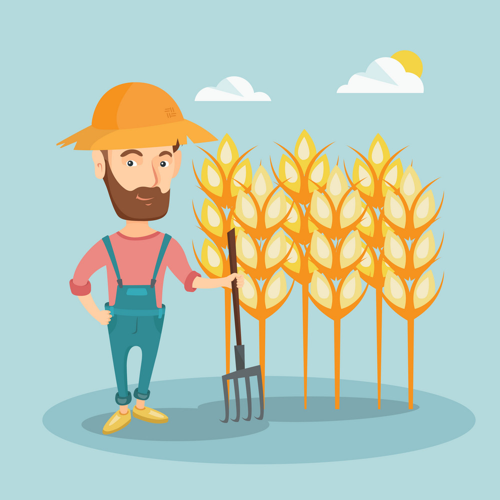 Hipster caucasian farmer in summer hat standing with a pitchfork on the background of wheat field. Smiling farmer working with pitchfork in wheat field. Vector flat design illustration. Square layout.
