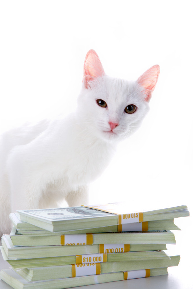 Image of cute white cat sitting by heap of dollar bills over white background