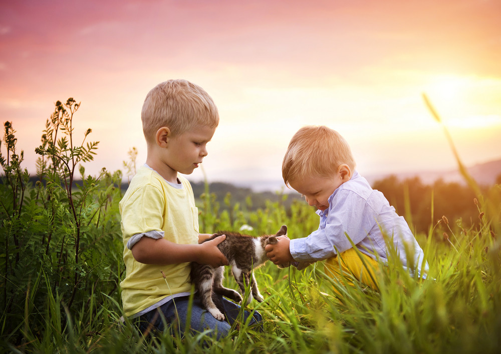 Little boys playing with kitten and having fun outside in a park