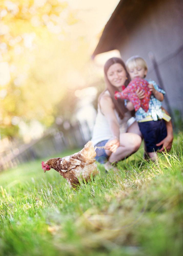 Mother and son playing with chicken outside. They are on the farm.