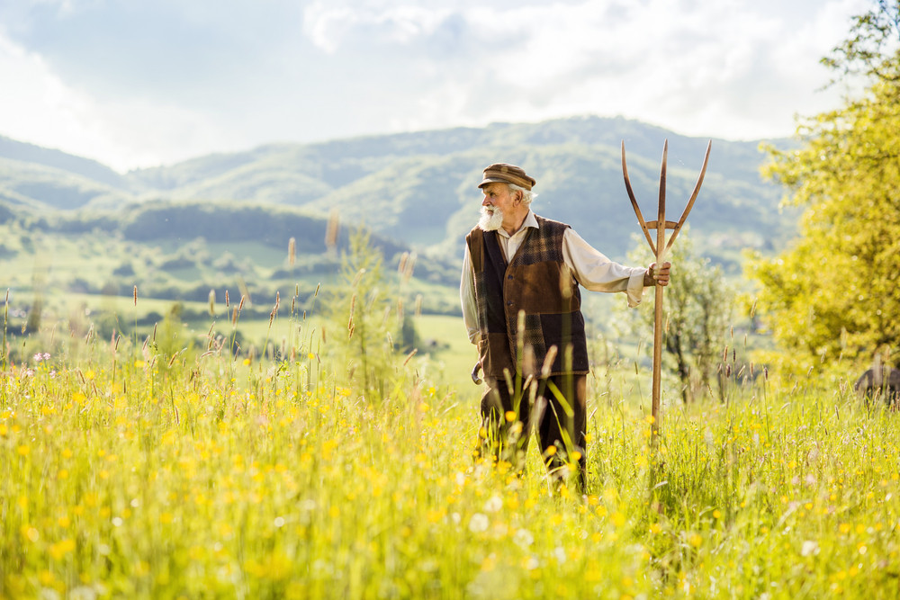 Old farmer with beard and hat is holding hayfork in meadow