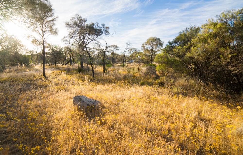 Outback Western Australia , sunset scene .