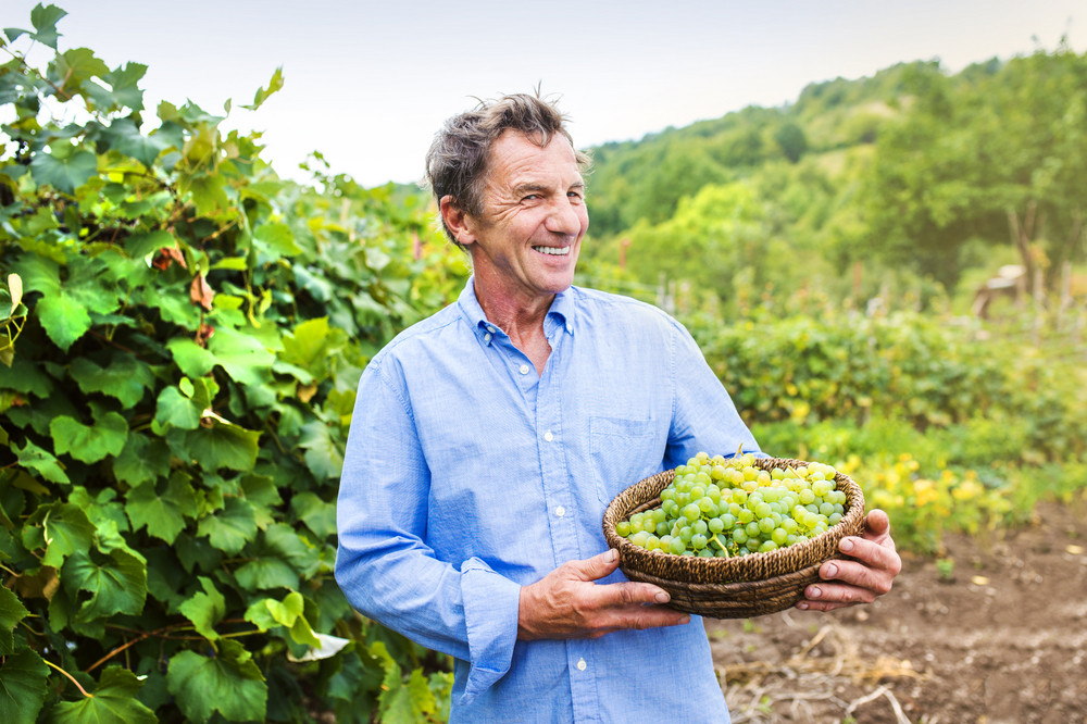 Portrait of a senior man holding a basket with grapes