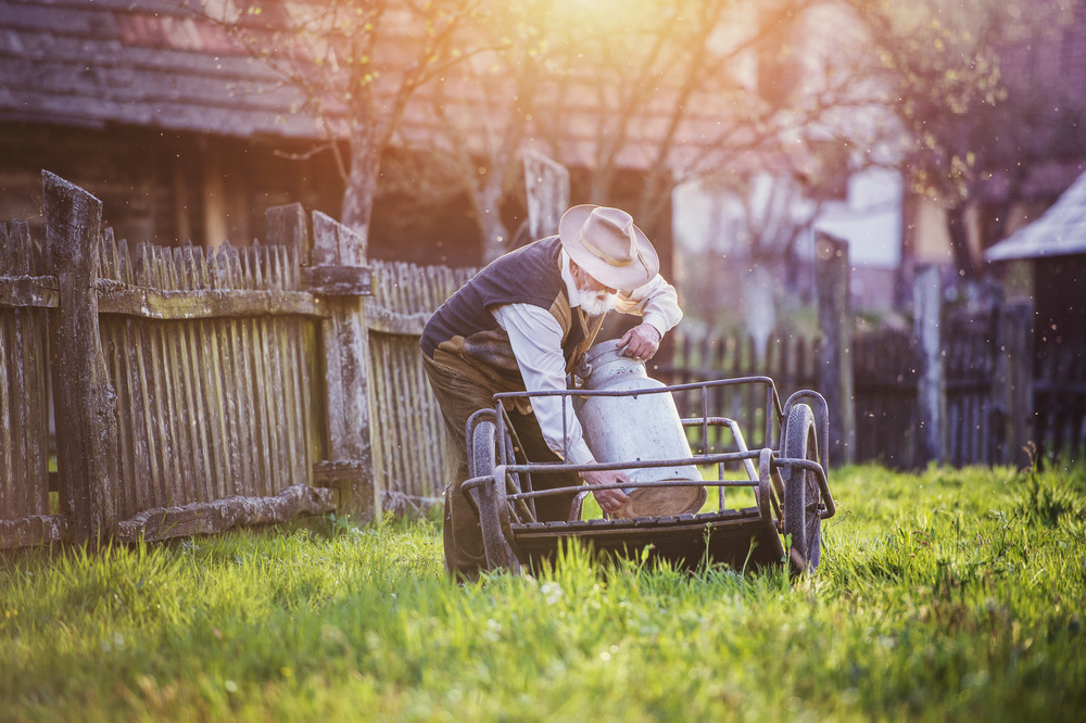 Senior farmer carrying kettle full of milk