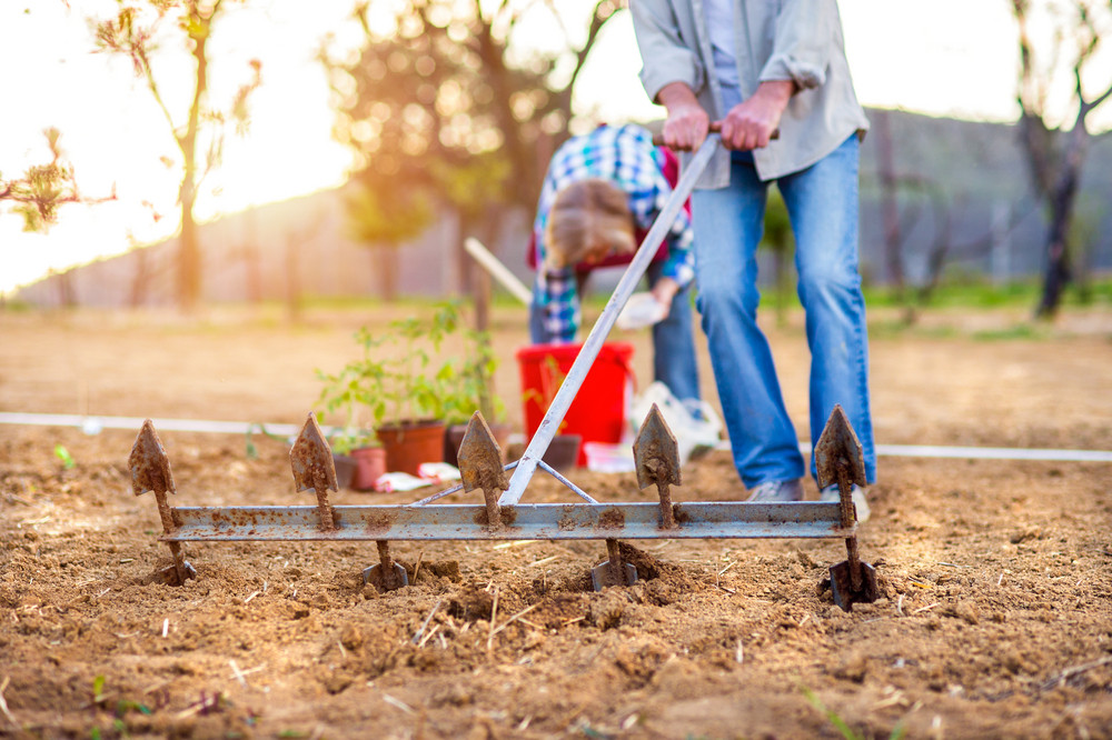 Senior woman and man in their garden plowing planting seeds and seedlings, sunny spring nature
