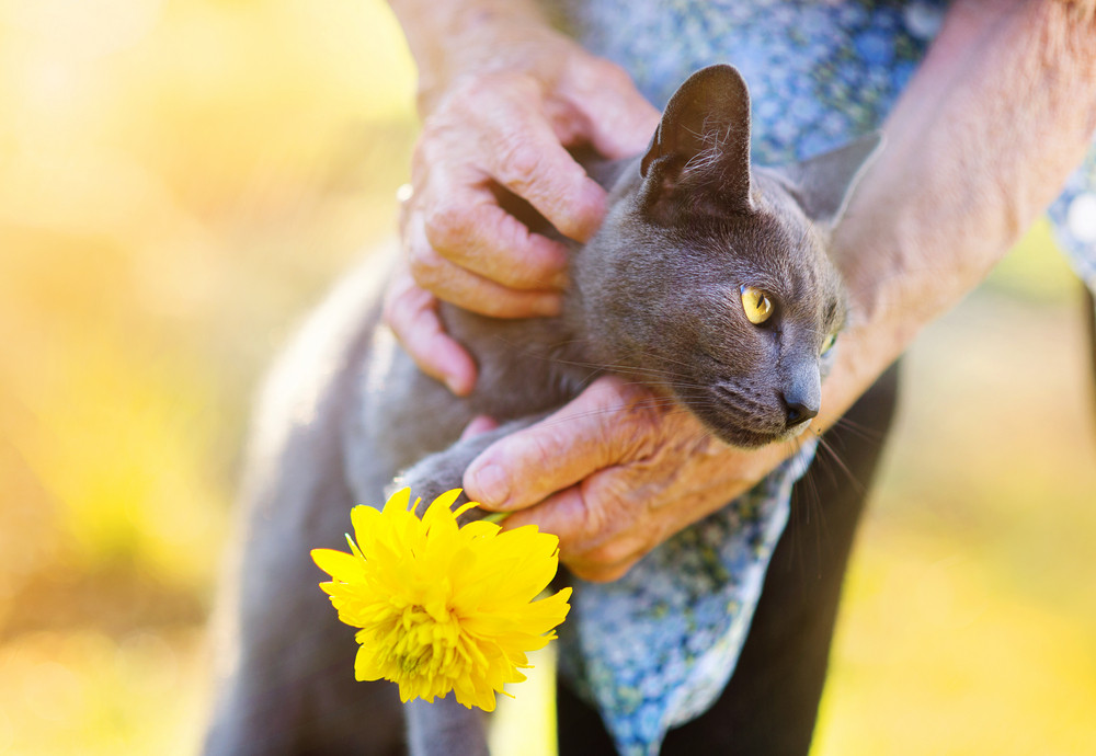 Senior woman in apron with her gray cat and yellow flower outside her house.