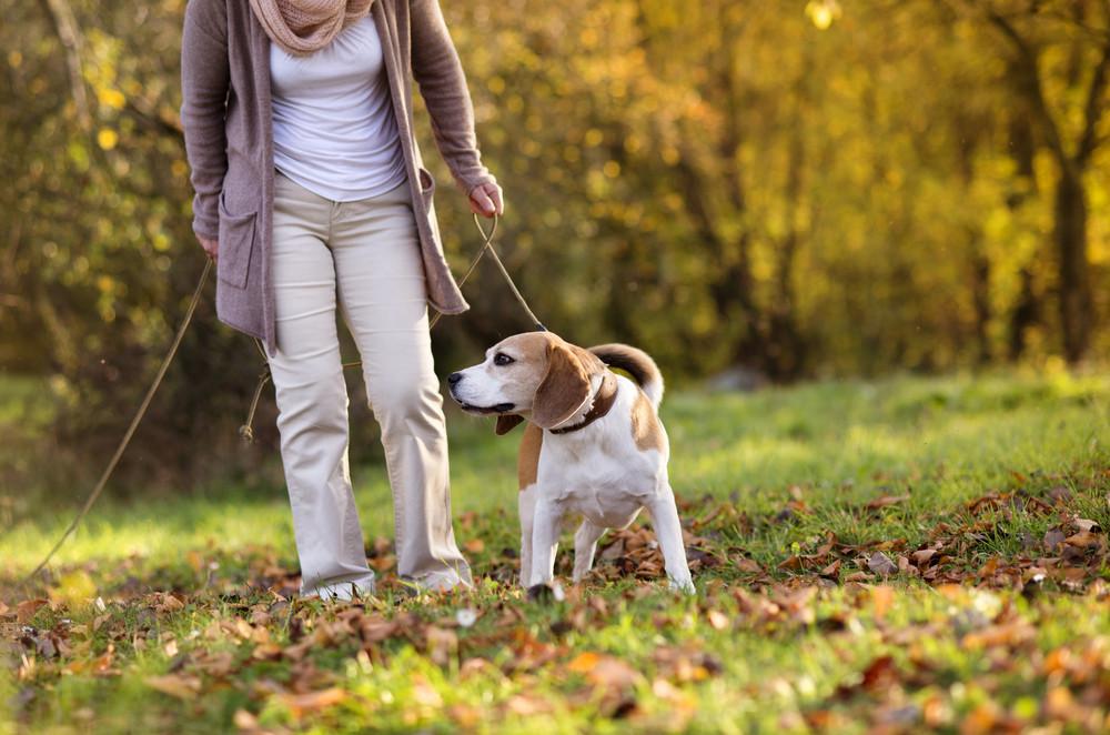 Senior woman walking her beagle dog in countryside