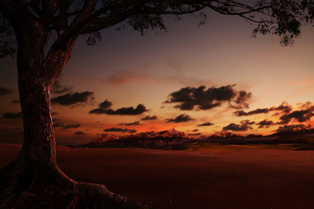 Sunset landscape and with silhouettes of tree,photo manipulation.