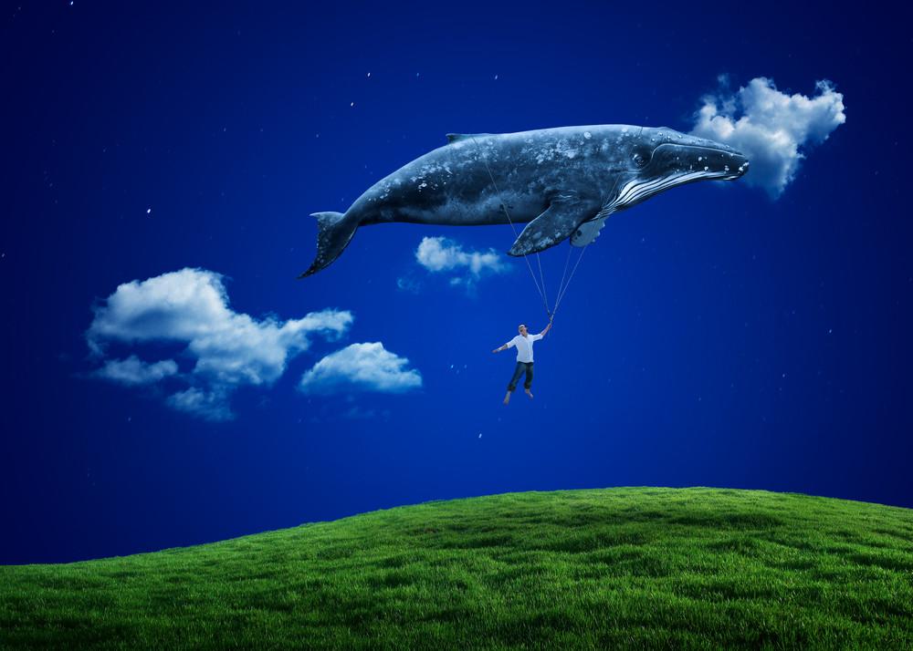 Take me to the dream
