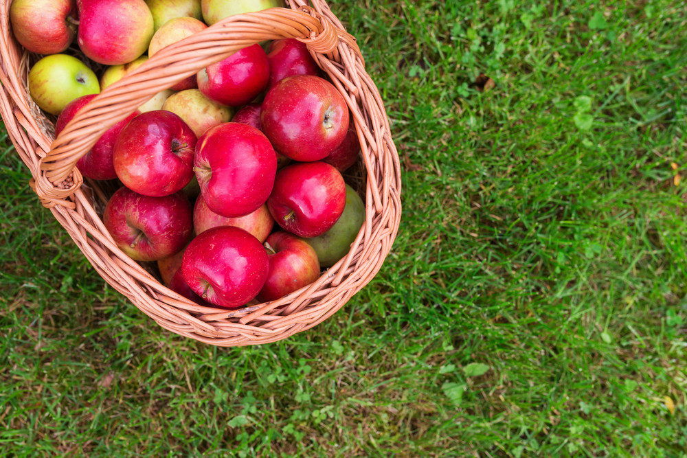 Wicker basket full of ripe red apples laid on a grass