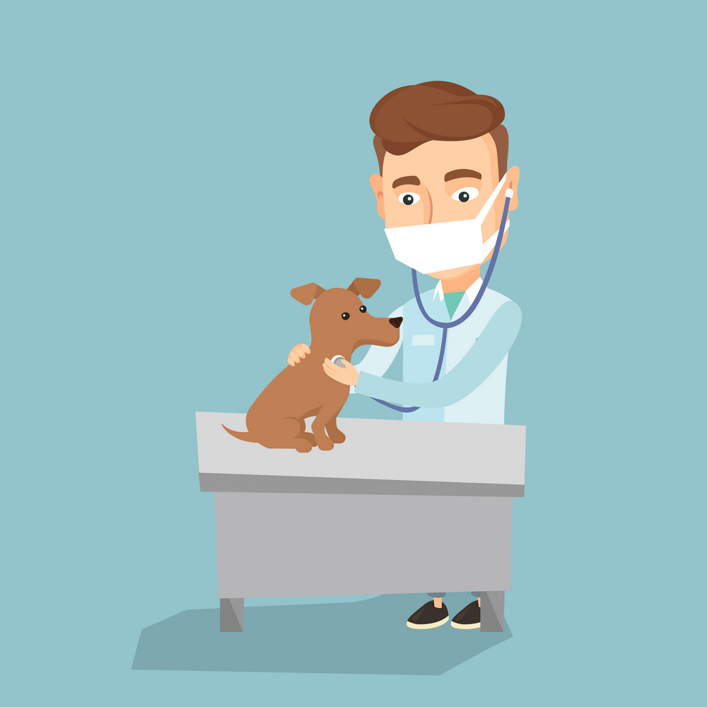 Young caucasian veterinarian examining dog in hospital. Veterinarian doctor checking heartbeat of a dog with stethoscope. Medicine and pet care concept. Vector flat design illustration. Square layout.