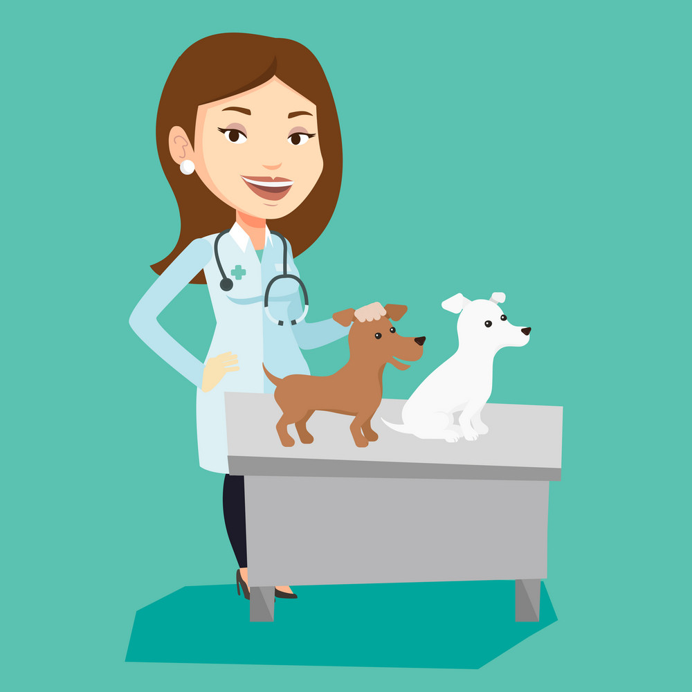 Young caucasian veterinarian with stethoscope examining dogs in hospital. Female veterinarian with dogs at vet clinic. Concept of medicine and pet care. Vector flat design illustration. Square layout.