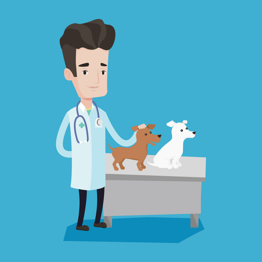 Young caucasian veterinarian with stethoscope examining dogs in hospital. Male veterinarian with dogs at vet clinic. Concept of medicine and pet care. Vector flat design illustration. Square layout.