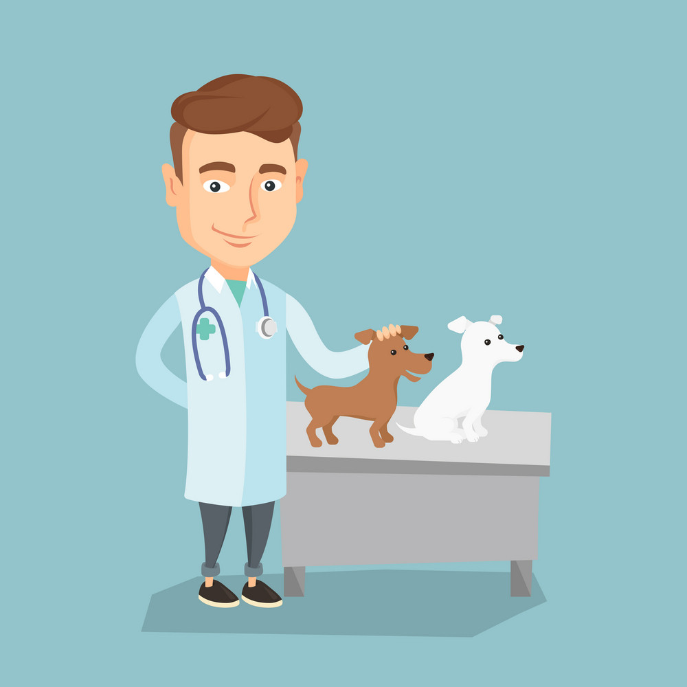 Young caucasian veterinarian with stethoscope examining dogs in hospital. Veterinarian doctor with dogs at vet clinic. Concept of medicine and pet care. Vector flat design illustration. Square layout.