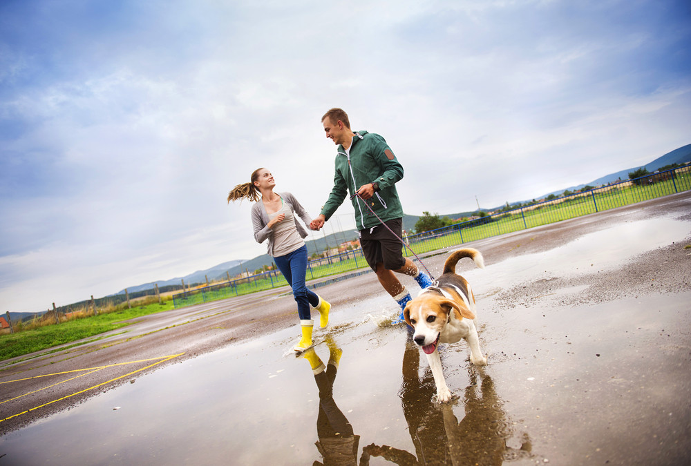 Young couple in colorful wellies walk beagle dog in rain.