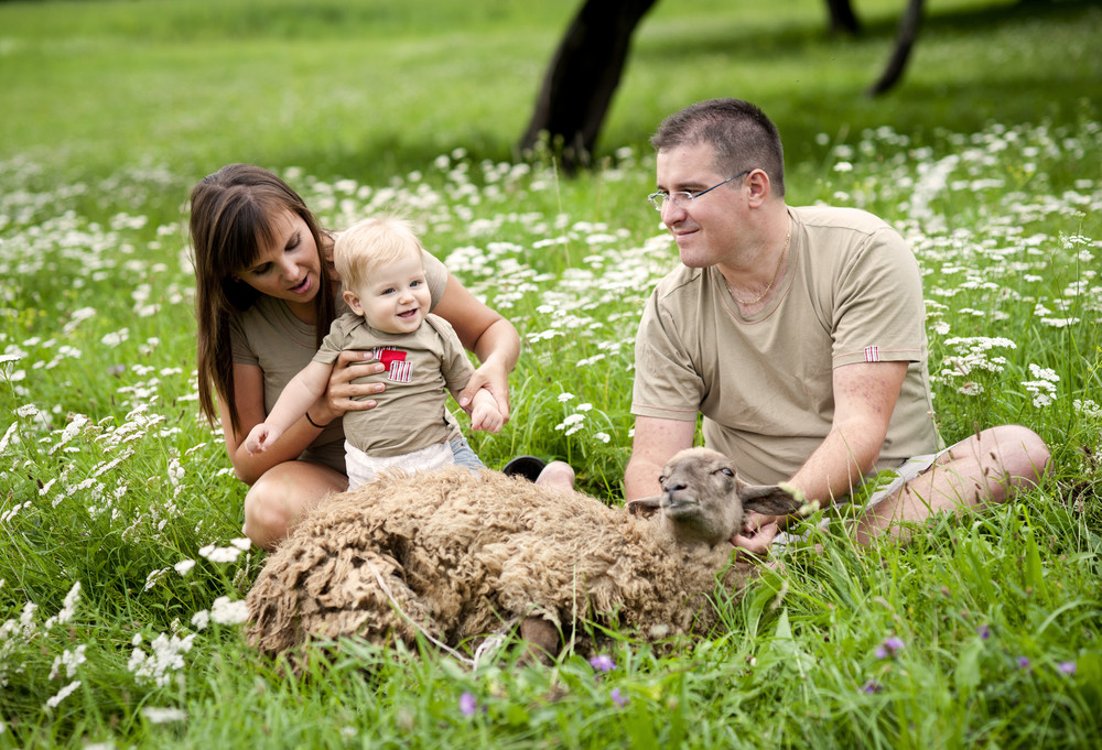 Young family is feeding sheep on the field