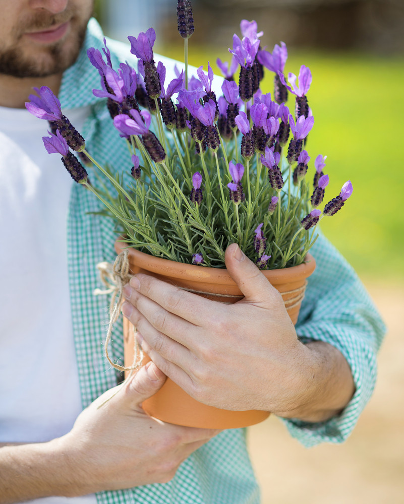 Young male gardener holding a pot with lavender