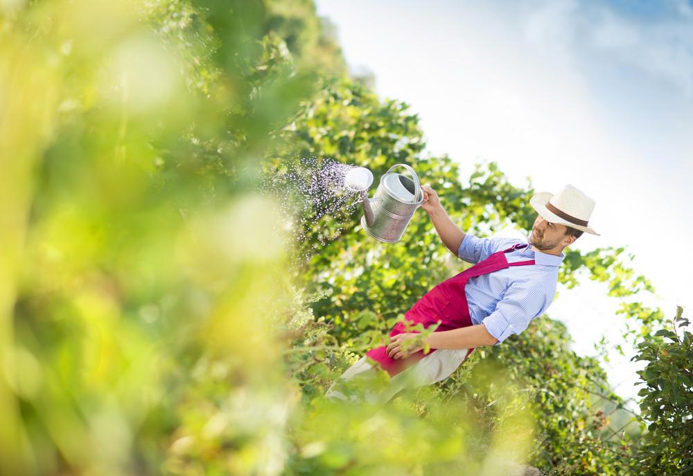 Young male gardener is watering plants in garden