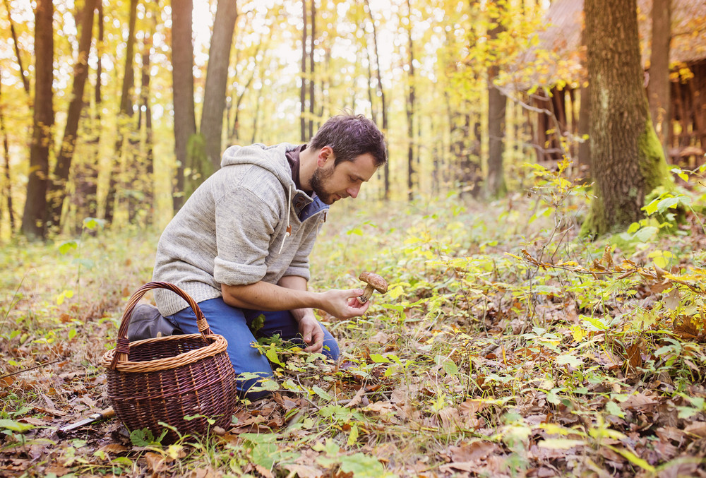 Young man picking mushrooms in autumn forest