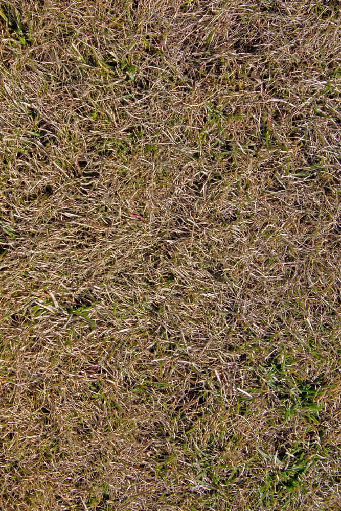 Grass Ground